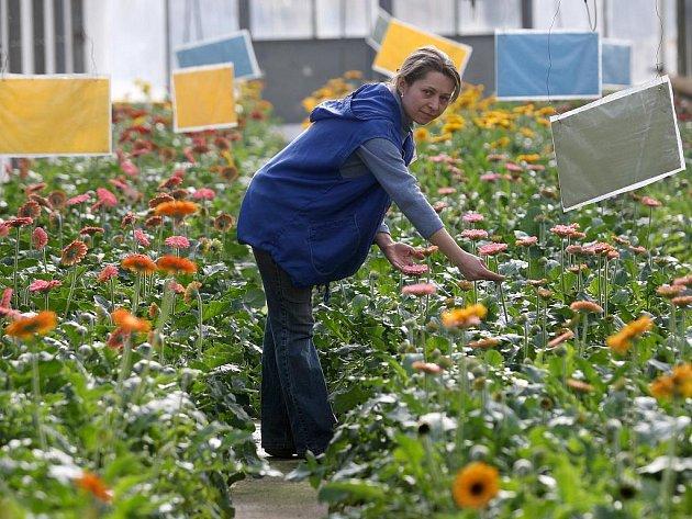 V zahradnictvích vypuklo jaro