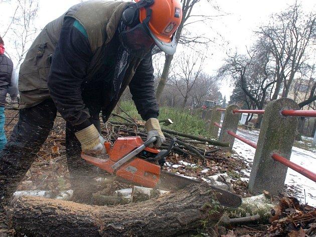 Opravdu se stromy v Porubě budu kácet?