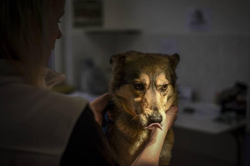 Fenka Wolfi.