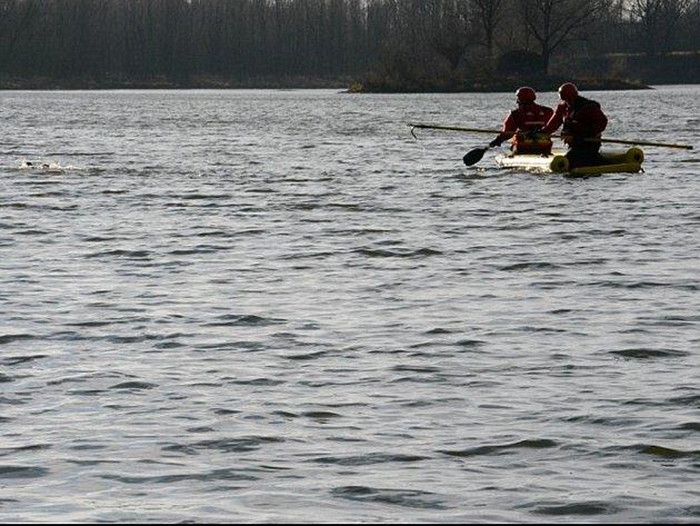 Hasiči zachraňovali v Ostravě-Koblově kachnu zamotanou v rybářském vlasci.