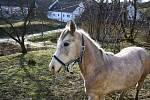 Azyl Ostrov naděje se v Bílém Potoce u Javorníka stará o vysloužilé koně.