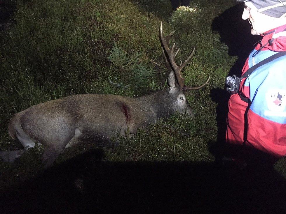 Tělo mrtvého myslivce leželo nedaleko od zastřeleného jelena.