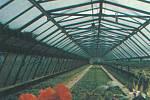 VE SKLENÍKU. Svépomocí vybudované skleníky Technických služeb plynule zásobovaly město čerstvou zeleninou i květinami.