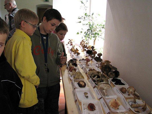 Výstava hub potrvá v šumperském muzeu do soboty 18. září