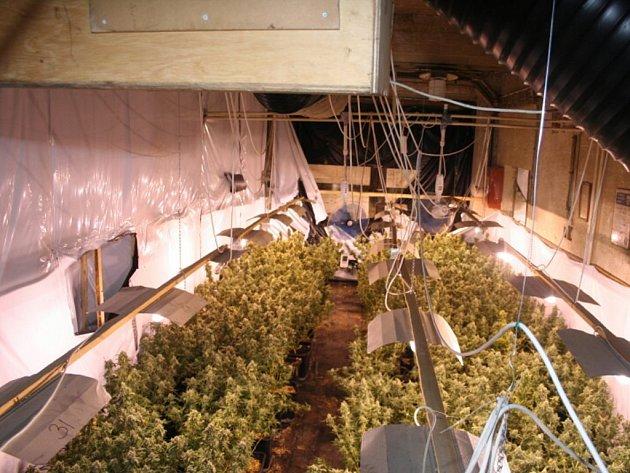 Pěstírna marihuany ve Velkých Losinách