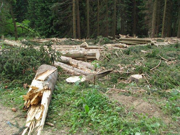 Tisíce polámaných a vyvrácených stromů musejí po vichřici vytěžit lesníci vokolí Dolní Moravy.