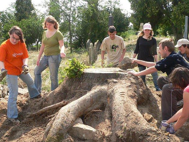 Skupina německých studentů čistí židovský hřbitov od náletových dřevin, které ohrožují staré náhrobky
