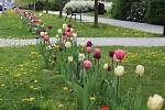 Květinová výzdoba na veřejných prostranstvích v Šumperku.