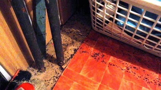 Značné množství myšího trusu objevili kontroloři ze Státní zemědělské a potravinářské inspekce v prodejně Phu Nguyen v Hrabišíně. Nařídili kvůli tomu obchod uzavřít, dokud majitel nesjednal nápravu.
