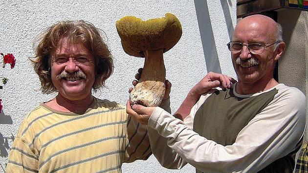 Kapitální úlovek houbaře Jindřicha Kaňka, který našel v mlází nedaleko Lipové-lázní. Obří pravák je skutečně impozantní, vždyť vážil 1,8 kilogramu