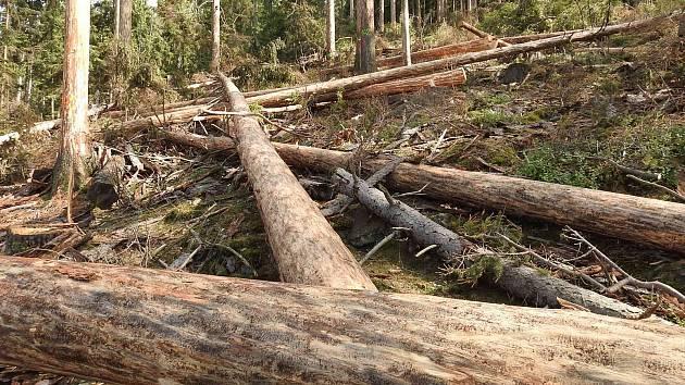 Pokácené stromy v rezervaci Suchý vrch v Jeseníkách.