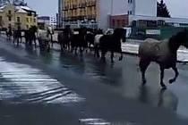 Stádo uprchlých koní na Zábřežské ulici v Šumperku.