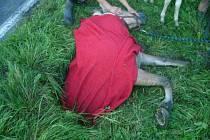 Hasiči zachraňovali klisnu, která spadla do jímky.