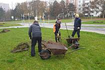 Výsadba stromů v Zábřehu