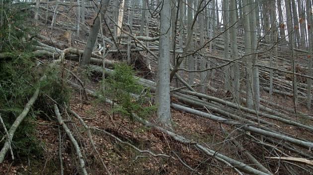 Takhle to vypadá na mnoha místech v revírech spadajících pod Lesní správu Ruda.