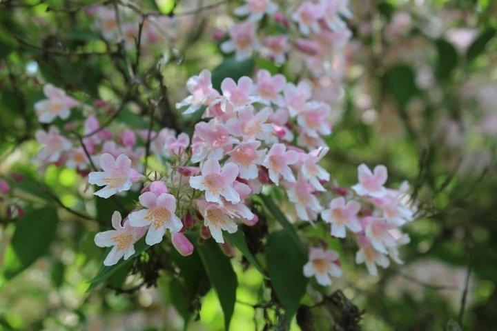 Květy raného léta