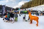 Snowboardisté v akci při happeningu.