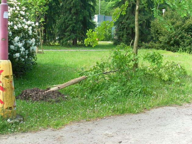 Ve Wolkerových sadech v Zábřehu někdo přelomil kmeny dvanácti stromků, které sem vysázeli teprve v březnu.