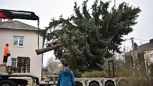 Kácení vánočního stromu pro Olomouc v Postřelmově - 22. 11. 2020