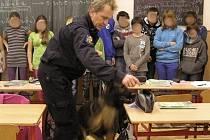 Cvičení zaměřené na výcvik služebních psů určených k vyhledávání drog podnikli v pátek 30. listopadu jeseničtí policisté spolu s psovody v Základní škole ve Vidnavě.