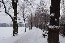 Lipová alej na hrázi rybníku Oborník v Zábřehu