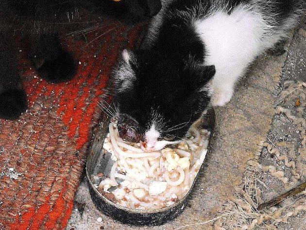 Jedno ze zraněných koťat, které přišlo o oko