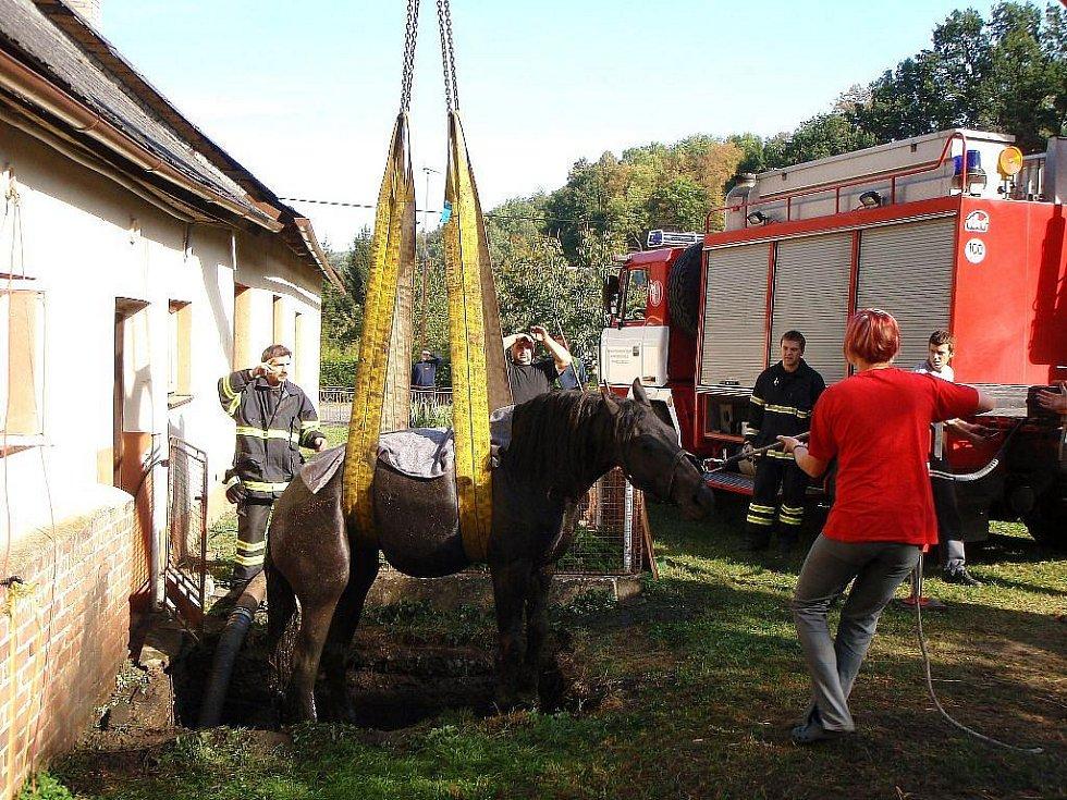 Hasiči vytahují z žumpy v Polici koně