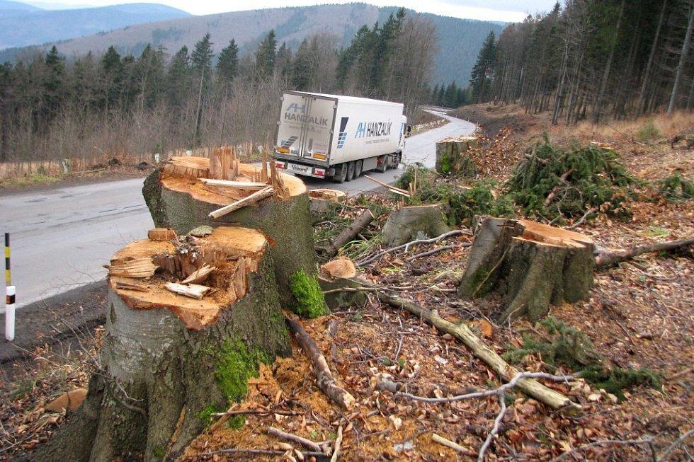 Dřevorubci vykáceli podél silnice na jižní straně Červenohorského sedla kvůli její rekonstrukci několik tisíc stromů.