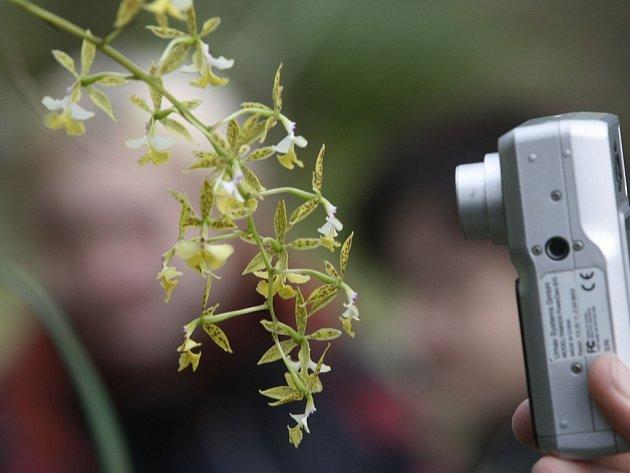 U Růžového údolí se to hemží vzácnými orchidejemi.