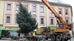 Vánoční stromy v Šumperku.