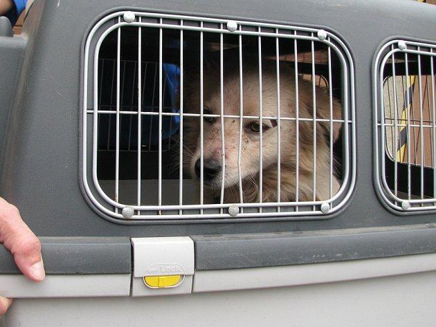 Psí nalezenec, kterého majitel hodil do popelnice.