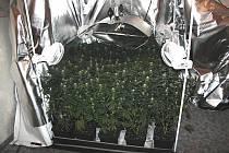 Policejní snímky pěstírny konopí v jednom z jesenických bytů