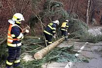Odstraňování padlého stromu z jedné ze silnic na Jesenicku