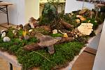 Výstava Houby v šumperském muzeu.