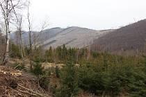 Následky kůrovcové kalamity - pohled na horu Větrná u Zlatých Hor.