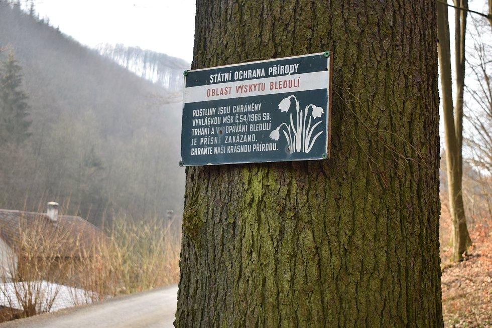 Bledule mezi Hoštejnem a Drozdovskou Pilou.