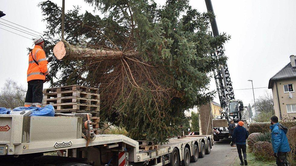 Kácení vánočního stromu v Postřelmově pro Olomouc - 22. 11. 2020