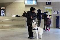 Výcvik asistenčních psů na nádraží v Zábřehu