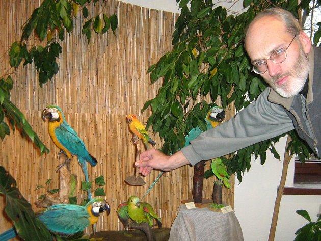 Exponáty na výstavě Pestrá krása papoušků jsou k nerozeznání od živých.