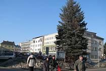 Stříbrný smrk na zábřežském náměstí měl být skácen 10. března, starosta akci po protestech občanů pozastavil