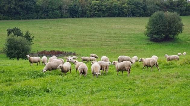 Ekologičtí zemědělci, kteří se věnují i živočišné výrobě, hospodaří v současné době v České republice přibližně na čtyřech stech tisících hektarech půdy.