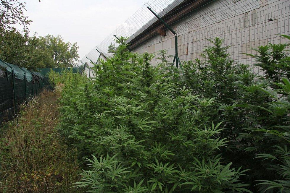 Muž na Zábřežsku pěstoval konopí, policie u něj našla i sušené rostliny a produkty z nich.