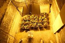 Odhalená indoorová pěstírna marihuany na Šumeprsku