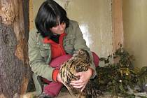 Záchranná stanice pro zraněná zvířata a opuštěná mláďata z volné přírody funguje od letošního léta v Rudě nad Moravou.