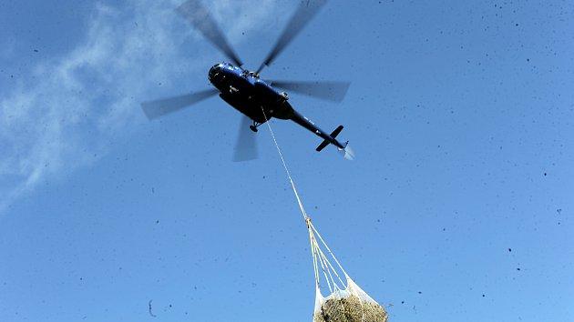 Transport vyrubané kleče vrtulníkem, Jeseníky, září 2020