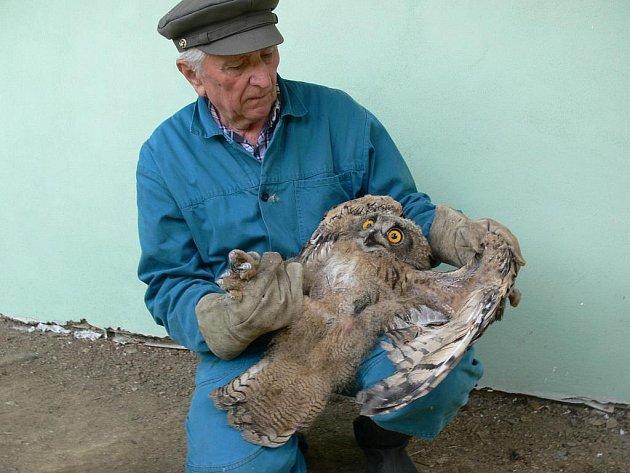 Leštinský ornitolog Eduard Neoral s jedním ze svých svěřenců – zraněným výrem