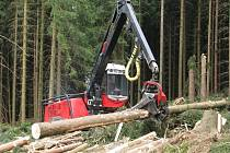 Tisíce polámaných a vyvrácených stromů musejí po vichřici vytěžit lesníci v okolí Dolní Moravy.