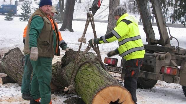 Dělníci začali kácet stromy ve Smetanových sadech v Šumperku.