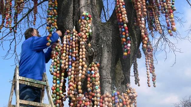 Nad hlavami přihlížejících věšeli dobrovolníci dlouhé šňůry kraslic do větví Skořápkovníku.