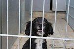 Psi odebraní majiteli v Kolšově v zábřežském útulku